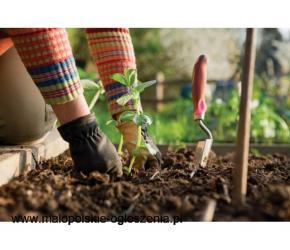 Praca przy sadzeniu warzyw od zaraz !!